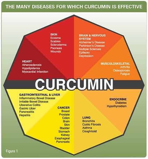 what does Curcumin do