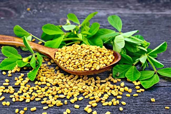 Facts about Fenugreek