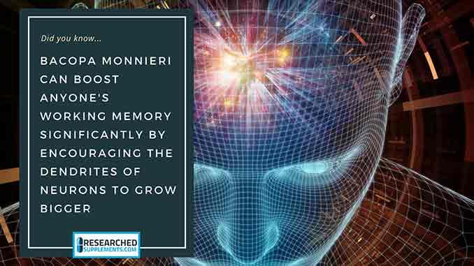 Brain - Bacopa Monnieri