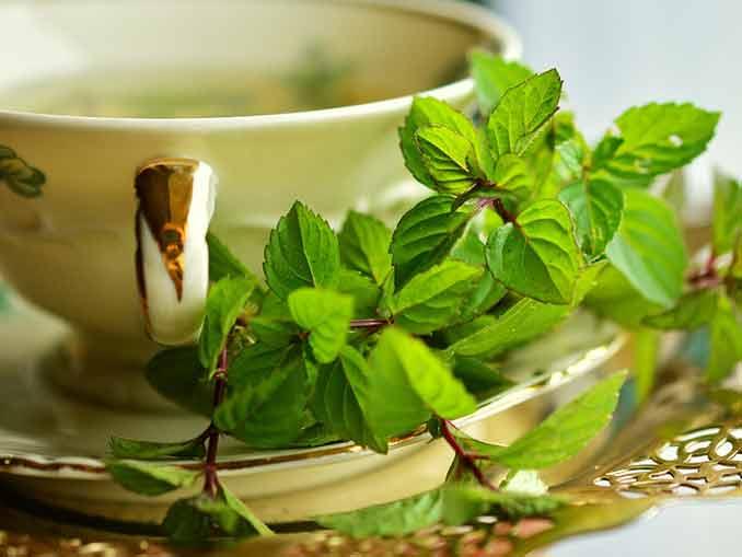 Green Tea benefits to extending your life