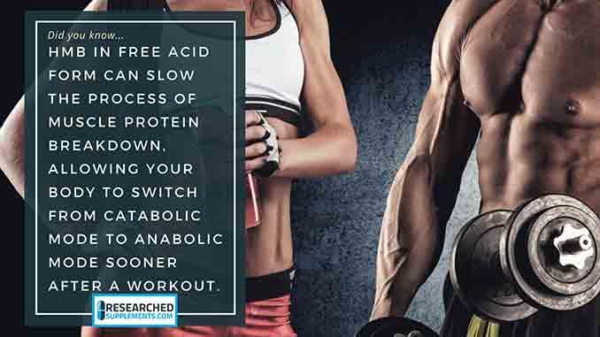 HMB - Free Acid Anti Catabolic, Reduces Muscle Damage, May Burn Fat
