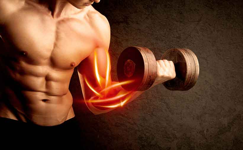 Building Muscle and Strength must have supplements