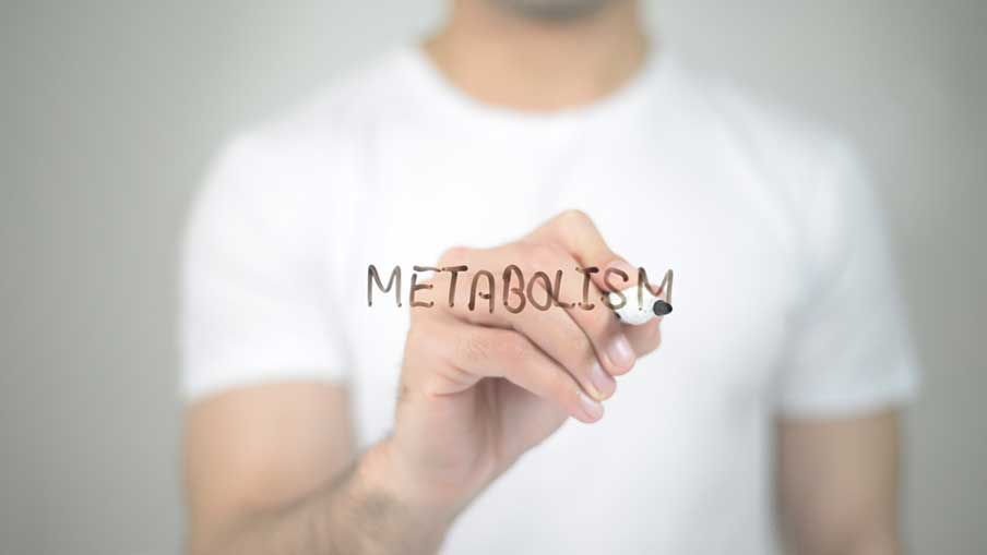 Calculate your Metabolism