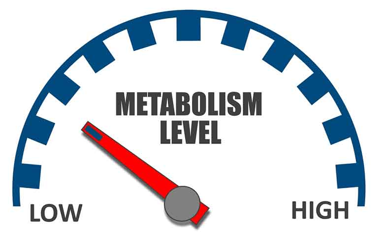 Do You Think You Have a Slow Metabolism