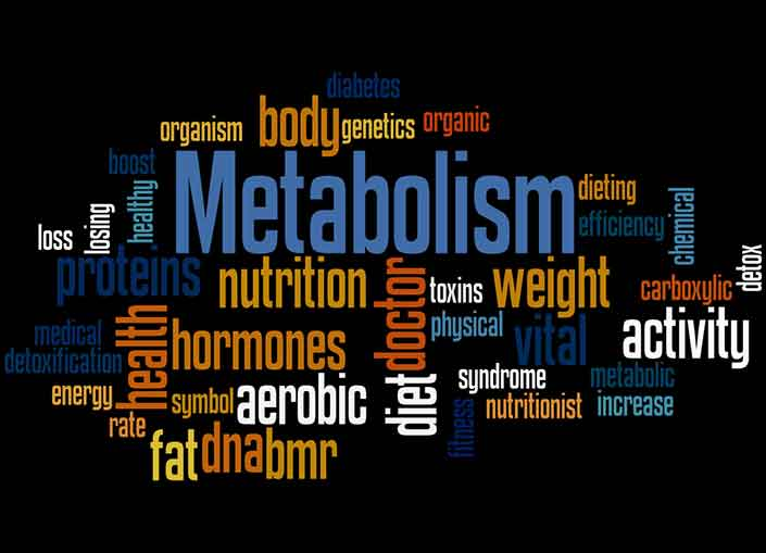 Metabolism and fat burning