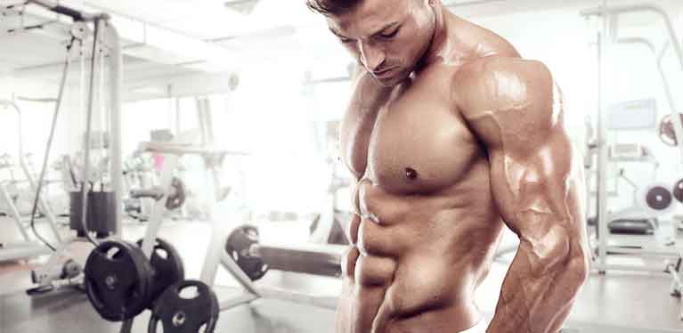 Muscles and fat burning