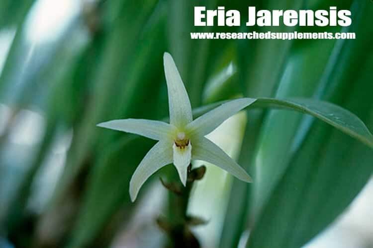 Eria Jarensis review