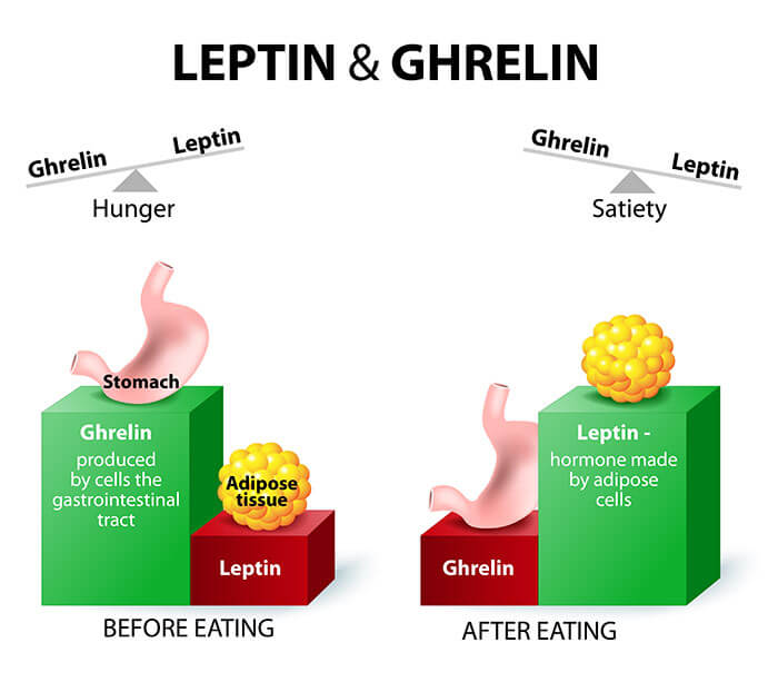 Leptin ghrelin