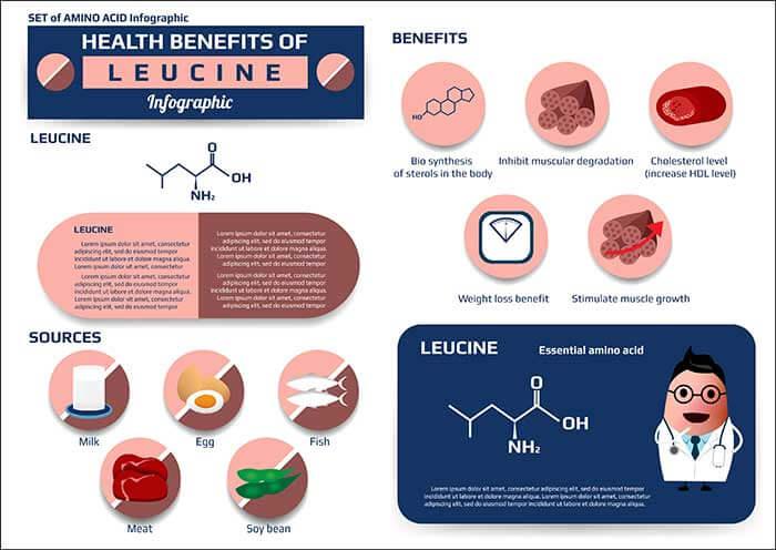 Leucine benefits for bodybuilding