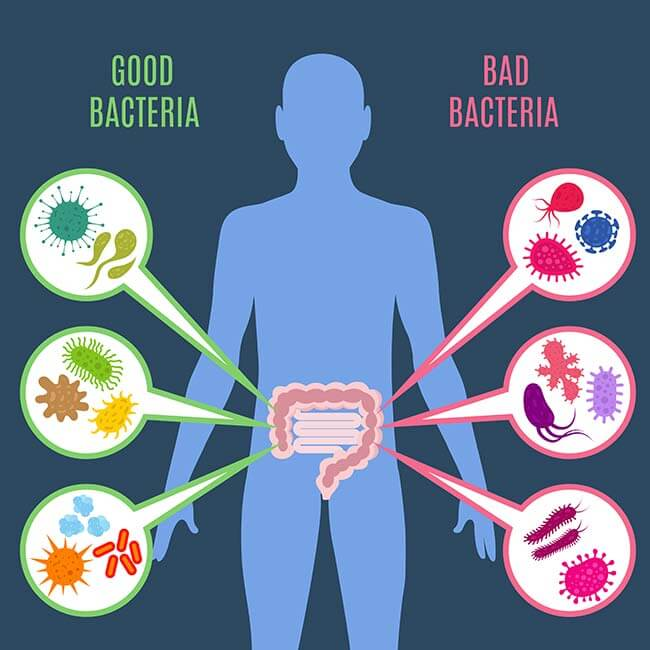 bad bacteria an good bacteria
