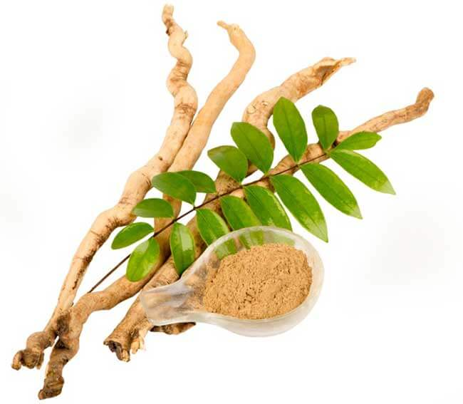 Eurycoma Longifolia and testosterone boosting
