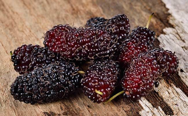 Mulberry extract blocks carbs